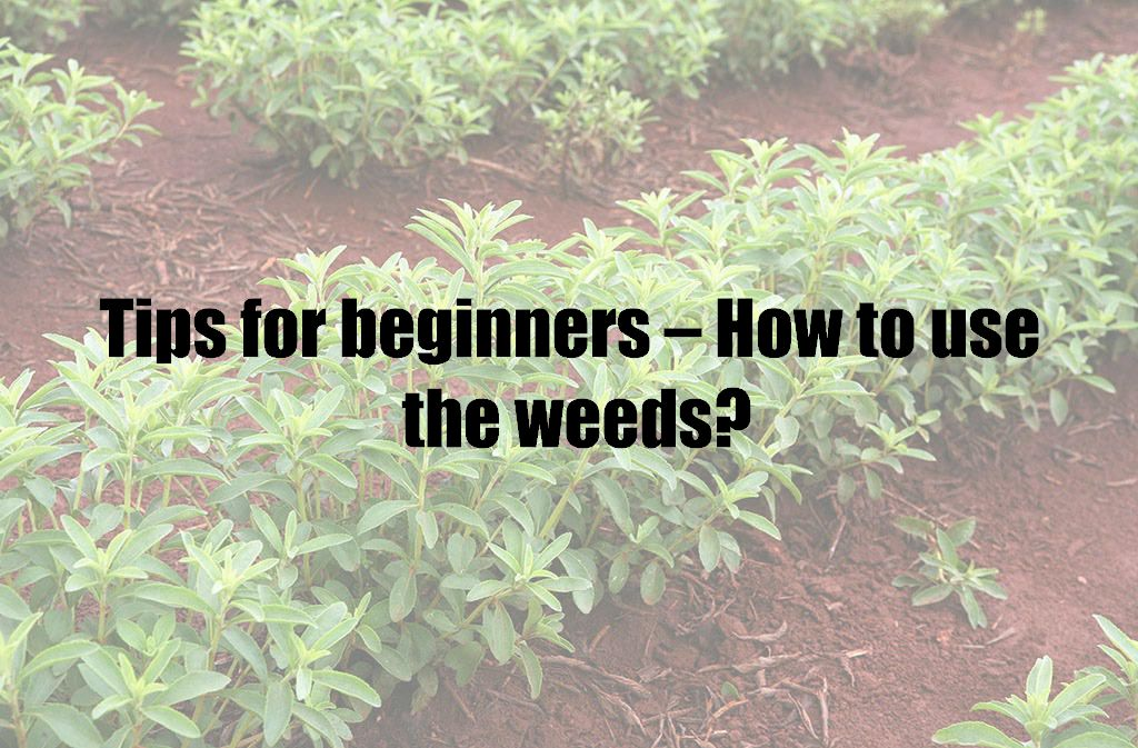 Tips for beginners – How to use the weeds?